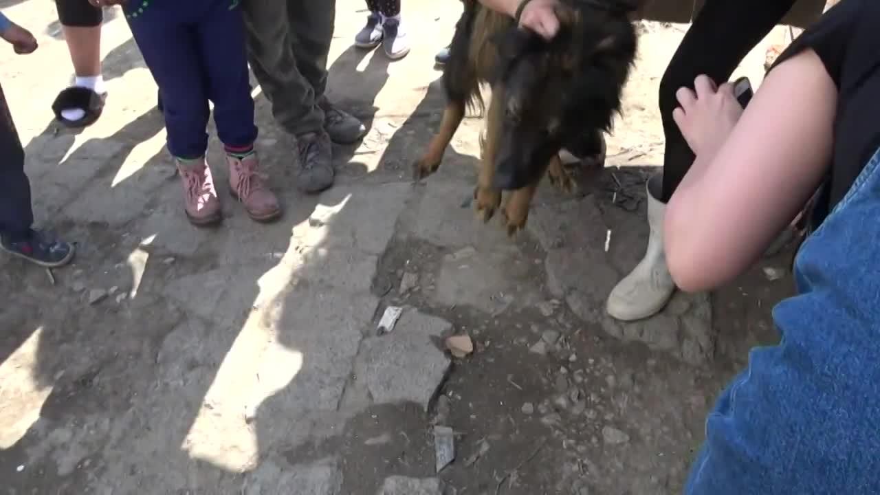 Psy v osade 6